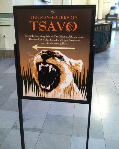 A sign inside the Field Museum directing visitors to the Tsavo lions exhibit