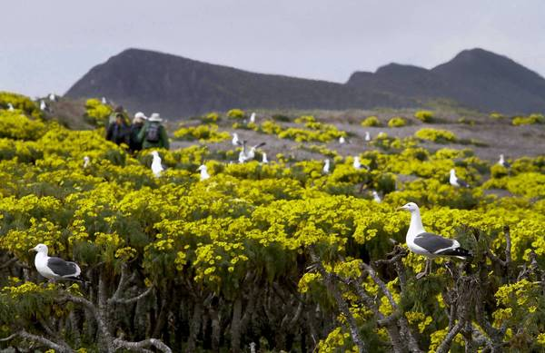 Western gulls on Anacapa Island, one of the islands featured in the environmental drama of Boyle's novel. Photo credit: Anne Cusack / Los Angeles Times